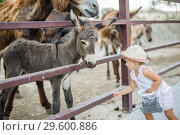 Купить «Golden Donkeys farm is a popular touristic place», фото № 29600886, снято 11 августа 2018 г. (c) katalinks / Фотобанк Лори