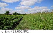 Купить «Beautiful nature in the countryside in Russia», видеоролик № 29603802, снято 25 июня 2018 г. (c) Володина Ольга / Фотобанк Лори