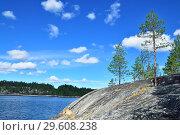Купить «Karelian landscape - rocks, pine trees and water. Bay Chupa, White Sea, Karelia, Russia», фото № 29608238, снято 10 августа 2018 г. (c) Сергей Трофименко / Фотобанк Лори