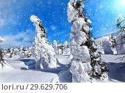 Winter forest against mountains. Winter wonderland with trees of unusual shape. Стоковое фото, фотограф Евгений Ткачёв / Фотобанк Лори