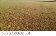 Купить «Beautiful field with ripe rye in Russia, forward movement», видеоролик № 29632534, снято 17 июня 2019 г. (c) Володина Ольга / Фотобанк Лори