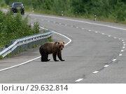 Купить «Медведь на дороге», фото № 29632814, снято 31 июля 2018 г. (c) А. А. Пирагис / Фотобанк Лори