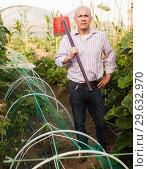 Купить «Gardener working in glasshouse», фото № 29632970, снято 16 августа 2018 г. (c) Яков Филимонов / Фотобанк Лори