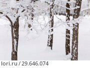 Купить «Natural background, landscape. Cold winter frosty day. Snow weather, climatic conditions in January, December and February. Trees covered with snow and snow», фото № 29646074, снято 23 декабря 2018 г. (c) Светлана Евграфова / Фотобанк Лори