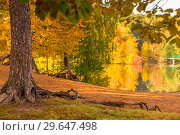 Купить «The shore of a lake in an autumn park, the colored foliage of trees on a sunny day», фото № 29647498, снято 2 октября 2016 г. (c) Константин Лабунский / Фотобанк Лори