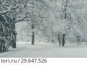 Купить «branches deciduous trees in winter, natural winter landscape background», фото № 29647526, снято 4 февраля 2018 г. (c) Константин Лабунский / Фотобанк Лори