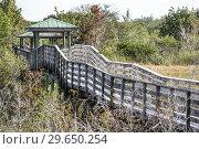 Купить «Florida, Fort Ft. Lauderdale, Pembroke Pines, Chapel Trail Nature Preserve, raised boardwalk park wetlands,», фото № 29650254, снято 22 декабря 2018 г. (c) age Fotostock / Фотобанк Лори