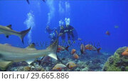 Купить «Shark Underwater Footage», видеоролик № 29665886, снято 20 апреля 2019 г. (c) Wavebreak Media / Фотобанк Лори