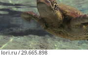 Купить «Underwater Turtle», видеоролик № 29665898, снято 22 апреля 2019 г. (c) Wavebreak Media / Фотобанк Лори