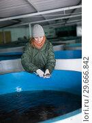 Купить «Woman examining young sturgeon on fish farm», фото № 29666842, снято 4 февраля 2018 г. (c) Яков Филимонов / Фотобанк Лори