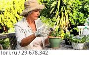 Retired woman potting plants. Стоковое видео, агентство Wavebreak Media / Фотобанк Лори