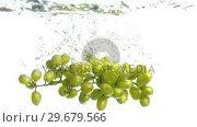 Купить «Grapes falling into water in super slow motion», видеоролик № 29679566, снято 26 января 2012 г. (c) Wavebreak Media / Фотобанк Лори