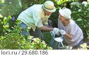 Купить «Old people watering plants in slow motion», видеоролик № 29680186, снято 24 ноября 2011 г. (c) Wavebreak Media / Фотобанк Лори