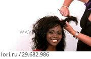 Купить «Hairdresser backcombing womans hair», видеоролик № 29682986, снято 27 августа 2012 г. (c) Wavebreak Media / Фотобанк Лори