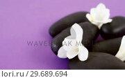 Купить «Close-up of pebble stones with flowers», видеоролик № 29689694, снято 24 августа 2016 г. (c) Wavebreak Media / Фотобанк Лори