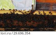 Купить «Beekeeper removing a wooden frame from beehive», видеоролик № 29696354, снято 27 октября 2016 г. (c) Wavebreak Media / Фотобанк Лори