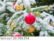 Купить «Новогодняя елка усыпанная белым снегом с красными и желтыми шарами. Москва», фото № 29704314, снято 3 января 2019 г. (c) E. O. / Фотобанк Лори