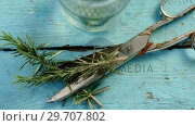 Купить «Rosemary and scissors on wooden table 4k», видеоролик № 29707802, снято 5 июня 2017 г. (c) Wavebreak Media / Фотобанк Лори