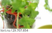 Купить «Coriander plant in jar 4k», видеоролик № 29707854, снято 5 июня 2017 г. (c) Wavebreak Media / Фотобанк Лори
