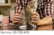 Купить «Young man stroking his pet cat in the kitchen 4K 4k», видеоролик № 29709410, снято 31 мая 2017 г. (c) Wavebreak Media / Фотобанк Лори