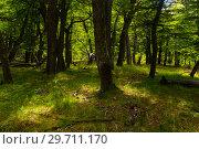 Купить «Woodland views», фото № 29711170, снято 1 февраля 2017 г. (c) Яков Филимонов / Фотобанк Лори