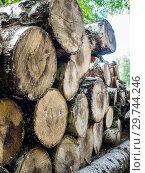 Купить «Chopped firewood logs in pile. Nature background. Wood preparation. Large pile of fresh cut wood», фото № 29744246, снято 2 июля 2017 г. (c) Евгений Бобков / Фотобанк Лори