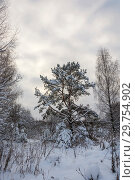 Купить «Winter landscape with snow-covered trees on a frosty December day», фото № 29754902, снято 29 декабря 2018 г. (c) Валерий Смирнов / Фотобанк Лори