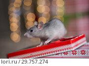Купить «Gray rat with gifts on the background of the Christmas tree», фото № 29757274, снято 19 января 2019 г. (c) Типляшина Евгения / Фотобанк Лори