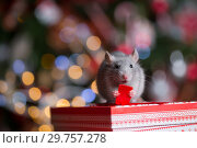 Купить «Gray rat with gifts on the background of the Christmas tree», фото № 29757278, снято 19 января 2019 г. (c) Типляшина Евгения / Фотобанк Лори