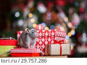 Купить «Gray rat with gifts on the background of the Christmas tree», фото № 29757286, снято 19 января 2019 г. (c) Типляшина Евгения / Фотобанк Лори