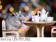 Купить «Gray rat symbol of the new year», фото № 29757302, снято 19 января 2019 г. (c) Типляшина Евгения / Фотобанк Лори