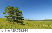 Купить «Alone tree in a highlands», фото № 29768910, снято 9 августа 2008 г. (c) Stockphoto / Фотобанк Лори