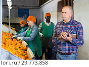 Купить «Serious owner of fruit warehouse checking work of female employees engaged in tangerines sorting», фото № 29773858, снято 15 декабря 2018 г. (c) Яков Филимонов / Фотобанк Лори