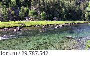 Купить «Прозрачная чистая вода в горном ручье. Норвегия», видеоролик № 29787542, снято 19 января 2019 г. (c) Кекяляйнен Андрей / Фотобанк Лори