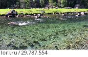 Купить «Прозрачная чистая вода в горном ручье», видеоролик № 29787554, снято 19 января 2019 г. (c) Кекяляйнен Андрей / Фотобанк Лори