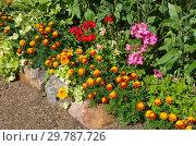 Купить «Цветочный бордюр в летнем саду», фото № 29787726, снято 10 августа 2018 г. (c) Елена Коромыслова / Фотобанк Лори