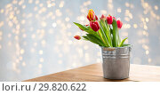 red tulip flowers in bucket on table over lights. Стоковое фото, фотограф Syda Productions / Фотобанк Лори