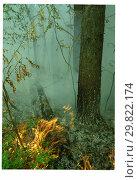 2010 год. Лесные пожары в Москве. Стоковое фото, фотограф Борис Кавашкин / Фотобанк Лори