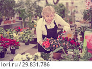 Купить «Woman gardener is taking care of flowers with secateur», фото № 29831786, снято 23 февраля 2018 г. (c) Яков Филимонов / Фотобанк Лори
