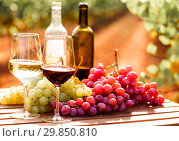 Купить «still life with glasses of red and white wine and grapes in field of vineyard», фото № 29850810, снято 16 февраля 2019 г. (c) Татьяна Яцевич / Фотобанк Лори