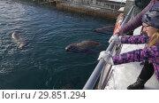 Купить «Люди наблюдают за сивучами в море», видеоролик № 29851294, снято 4 февраля 2019 г. (c) А. А. Пирагис / Фотобанк Лори