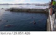 Купить «Люди наблюдают за сивучами в океане», видеоролик № 29851426, снято 4 февраля 2019 г. (c) А. А. Пирагис / Фотобанк Лори