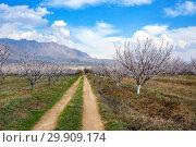 Купить «Apricot farm during sping season against Vayk mountain range, Vayots Dzor Province, Armenia», фото № 29909174, снято 16 марта 2018 г. (c) Papoyan Irina / Фотобанк Лори