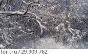 Купить «Beautiful snow winter forest, slider dolly shot», видеоролик № 29909762, снято 17 января 2019 г. (c) Михаил Коханчиков / Фотобанк Лори