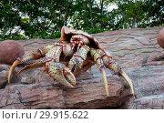 Купить «Russia, Vladivostok, July 2018: a large crab on the territory of the Vladivostok oceanarium», фото № 29915622, снято 28 июля 2018 г. (c) Катерина Белякина / Фотобанк Лори