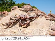 Купить «Russia, Vladivostok, July 2018: a large crab on the territory of the Vladivostok oceanarium», фото № 29915654, снято 28 июля 2018 г. (c) Катерина Белякина / Фотобанк Лори