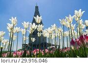 Купить «Цветущие белые тюльпаны на фоне церкви Вознесенья Господнего в Коломенском, Москва. Солнечный день в середине мая», фото № 29916046, снято 14 мая 2018 г. (c) Сергей Рыбин / Фотобанк Лори