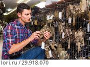Купить «Man choosing holster for gun in military shop», фото № 29918070, снято 4 июля 2017 г. (c) Яков Филимонов / Фотобанк Лори