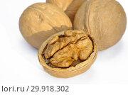 Купить «Грецкие орехи на белом фоне крупным планом», фото № 29918302, снято 18 октября 2018 г. (c) Елена Коромыслова / Фотобанк Лори