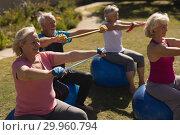 Group of senior people exercising in the park. Стоковое фото, агентство Wavebreak Media / Фотобанк Лори